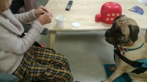Terapihunden Hjärtat